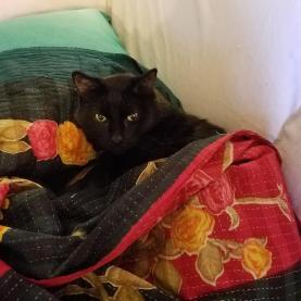Milton tucked in