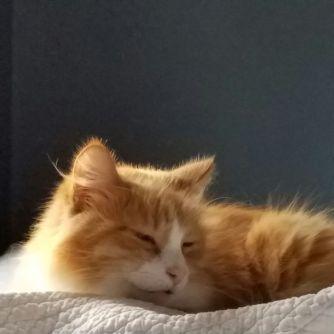 2016 Vlad in bed calendar cat pic